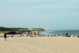 The Beach at Cape Henlopen