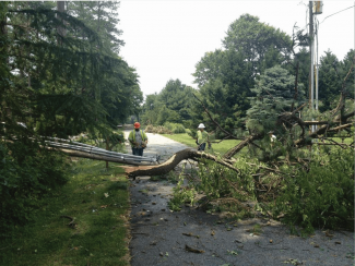 Crews cut up a tree