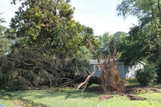 An EF0 tornado uprooted a treenear the Co-op headquarters in Greenwood.