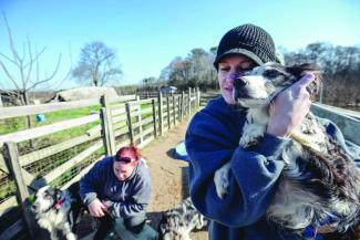 Volunteers remove neglected animals from  a Sussex County property.