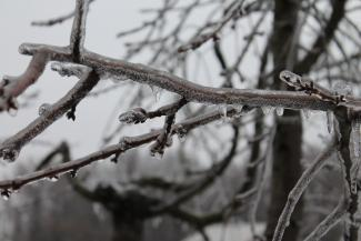 Ice on a tree